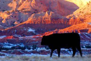 Cow in Abiquiu