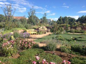 SF Botanical Garden 2
