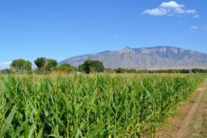Wagner Corn Maze